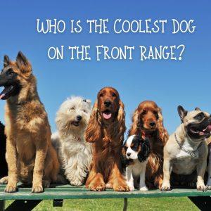 Coolest Dog on the Front Range